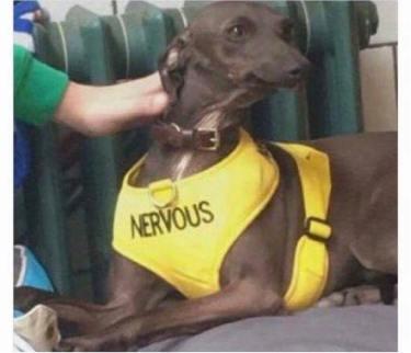 nervous-pupper